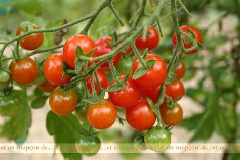creer sa cuisine trois idées autour de la tomate cerise et un soupçon de
