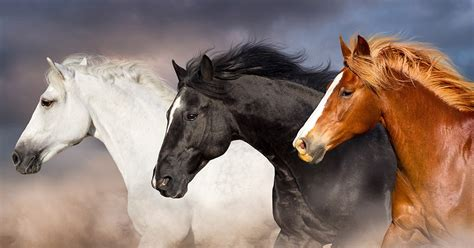 horses outrun speedy loss horse course og animal genesis cant