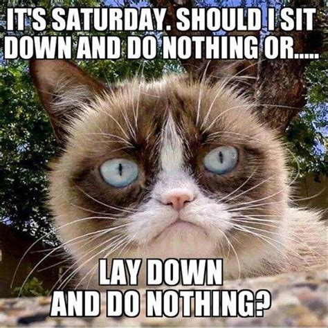Saturday Memes 18 - funny animal picture dump of the day 24 pics