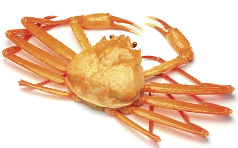 comment cuisiner le homard crabe des neiges poissonnerie produits à découvrir iga