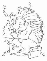 Porcupine Coloring Listening Drawing Sheets Line Bestcoloringpagesforkids Colouring Printable Worksheets Porcupines Crested Getdrawings Getcolorings Animal sketch template
