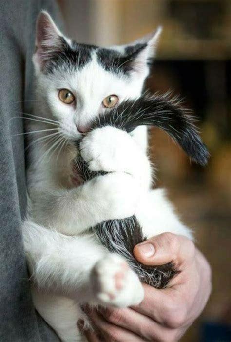 pin de ayari galvicius en gatos animaux chat  chat mignon