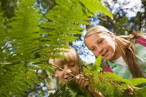 Farn Im Garten : farn pflanzen pflegen schneiden vermehren und mehr ~ Orissabook.com Haus und Dekorationen