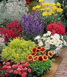 Schöner Garten Shop : bunter staudengarten 9 pflanzen g nstig online kaufen mein sch ner garten shop deko ~ Eleganceandgraceweddings.com Haus und Dekorationen