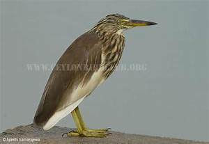 Indian Birds Images With Names