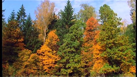 Herbst / Wald / Bialowieza-Nationalpark / Polen