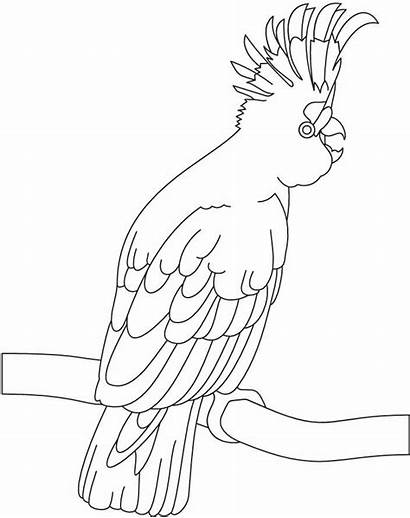 Coloring Pages Cockatoo Colouring Exotic Birds Sheets