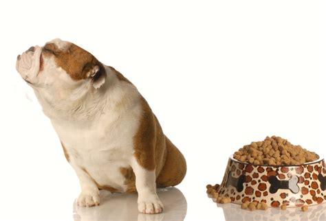 mon chien ne mange