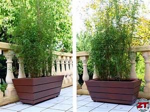 Bambou En Pot Pour Terrasse : quelle plante pour bac exterieur pivoine etc ~ Louise-bijoux.com Idées de Décoration