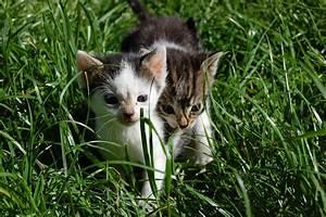 Gemüse Für Katzen : giftige ungiftige pflanzen f r katzen ~ Watch28wear.com Haus und Dekorationen