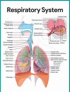 Body Systems List