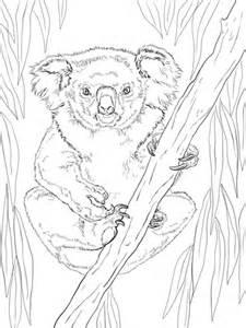friendly female koala coloring page supercoloringcom