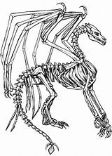 Skelett Astounding Celtic Ikidsdrawing Youngandtae Pngkit Pngfind Kidsdrawing sketch template