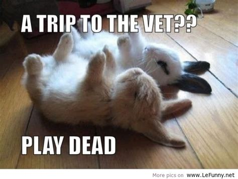 Funny Animals With Quotes 17 Hd Wallpaper Funnypictureorg