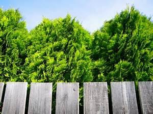 Grenzabstand Bäume Nrw : grenzabstand ~ Frokenaadalensverden.com Haus und Dekorationen