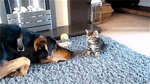 Dog Pushes Cat Cute GIF - Best Reddit Pictures