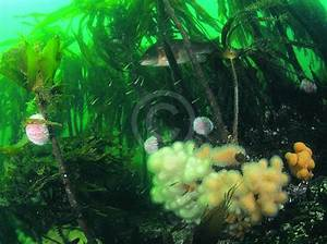 Photographs: habitat scenes - Marine Photos - Great ...