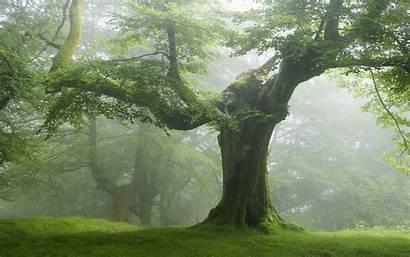 Trees Nature Forest Landscape Resolution Tree Desktop