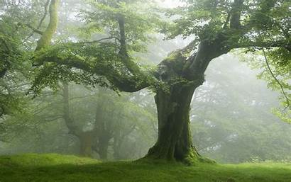 Trees Tree Nature Forest Landscape Desktop Wallpapers