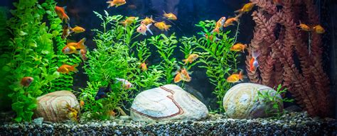 how to take care of a goldfish in an aquarium tank