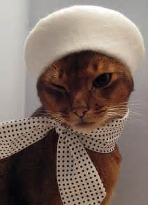 hats for cats feline fashion warehouse cat in a hat julie song s clothes for felines daily