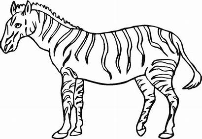 Coloring Pages Zebra Printable
