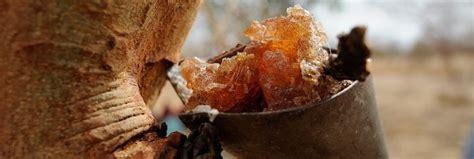 derichebourg siege social gomme arabique cuisine 100 images gomme arabique