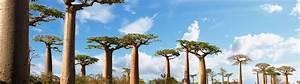 Vol Pas Cher Madagascar Comparateur De Prix : vol tul ar tle billet d 39 avion tul ar pas cher avec ~ Medecine-chirurgie-esthetiques.com Avis de Voitures