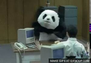 Angry Panda GIFs - Find & Share on GIPHY