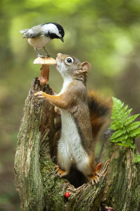 best 25 what do squirrels eat ideas on pinterest