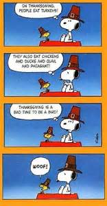 snoopy thanksgiving quote pictures photos and images for