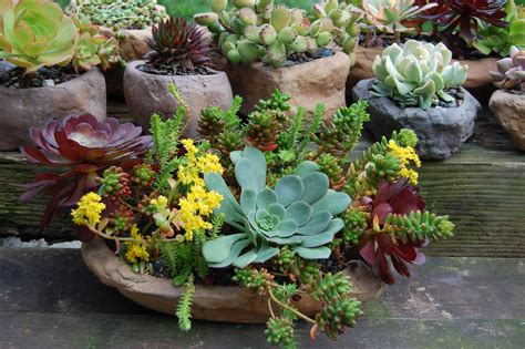 Succulent Plant Containerspace Gardening  Space Gardening