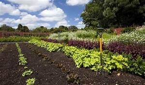 Quand Planter Lavande Dans Jardin : que planter dans son potager quand planter des l gumes dans son jardin ~ Dode.kayakingforconservation.com Idées de Décoration