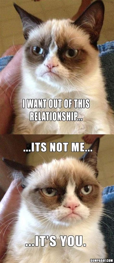 Best Angry Cat Meme - the best of angry cat 15 pics quotes pinterest kitty cats grumpy cat and grumpy cat