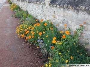 Plante De Bordure : des plantes sur mon trottoir ~ Preciouscoupons.com Idées de Décoration