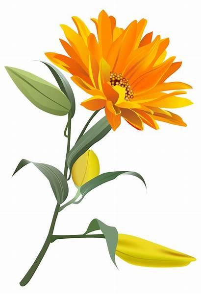 Orange Flower Flowers Clip Clipart Transparent Yopriceville
