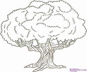 How to draw an oak tree | My Best Friends Wedding ...