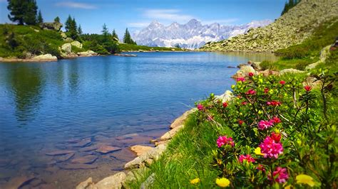 for tv over fireplace vindora relaxing alpine ambient video wallpapers for