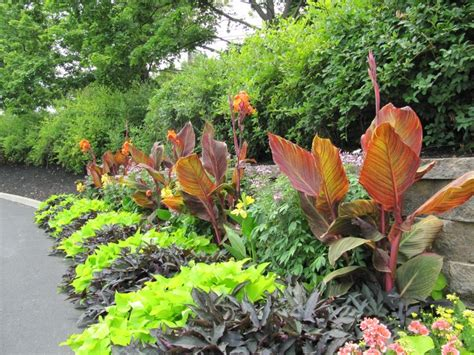 tropical plants zone 7 lovable tropical garden ideas adelaide and tropical garden ideas uk landscaping pinterest