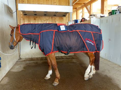 magnetfeldtherapie horse energy gesunde pferde fuer gutes
