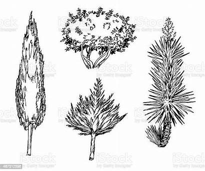 Types Different Drawn Tree