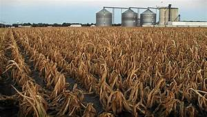 Maize crisis looms in SA | Business | M&G