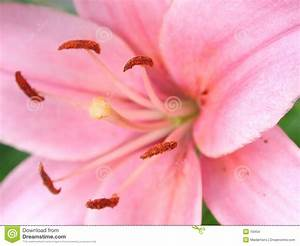 Real Pink Flower Backgrounds Stock Images - Image: 19454