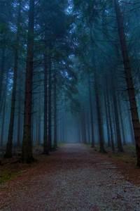 Dark woods - HD Wallpapers