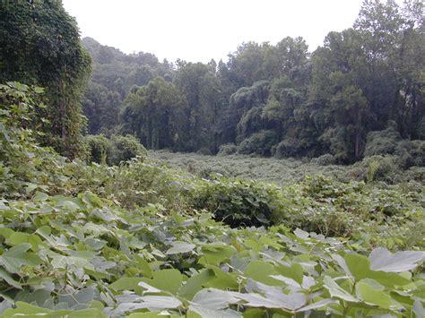 kudzu chattahoochee river national recreation area