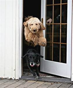 teaching your dog to respect doors thedogtrainingsecretcom With dog doors that keep other animals out