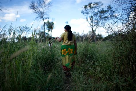 paraguays chaco forest  cleared  ranchers