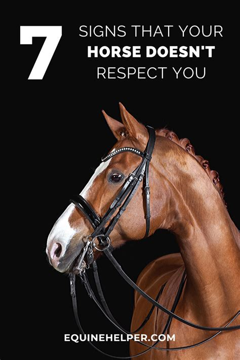 horse signs behavior training horses