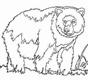 Malvorlage Mit Bären Die Beste Idee Zum Ausmalen Von Seiten