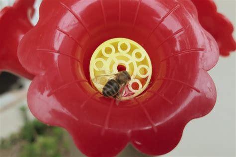 wasps bees    hummingbird feeder hunker